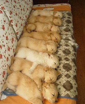 軍事化管理小狗的睡姿.jpg