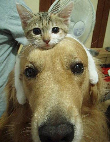 可愛的小貓小狗.jpg