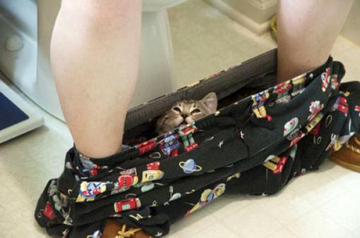 原來這就是躲貓貓的由來-1.jpg