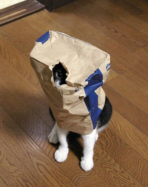 原來這就是躲貓貓的由來-3.jpg