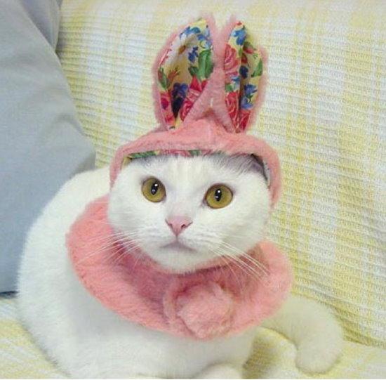 可愛的小白兔竟然會喵喵叫.jpg