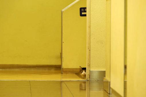 原來這就是躲貓貓的由來-16.jpg