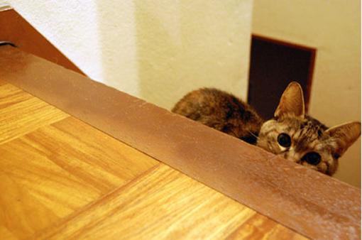 原來這就是躲貓貓的由來-18.jpg