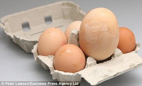 小雞雞產大蛋蛋-1.jpg