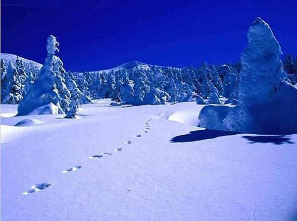 雪中足印.jpg