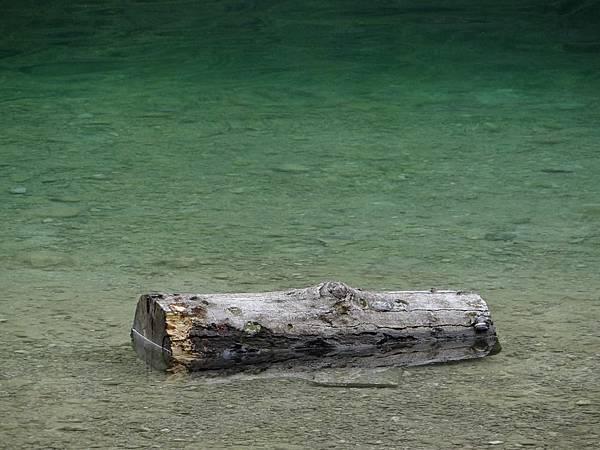 漂流木.jpg