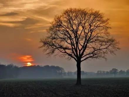 樹.png