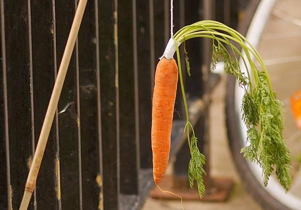 胡蘿蔔與棍子.jpg