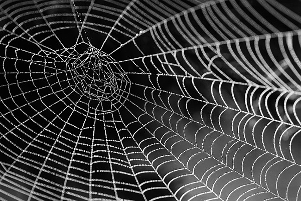 蜘蛛網.png