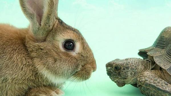 龜兔.jpg