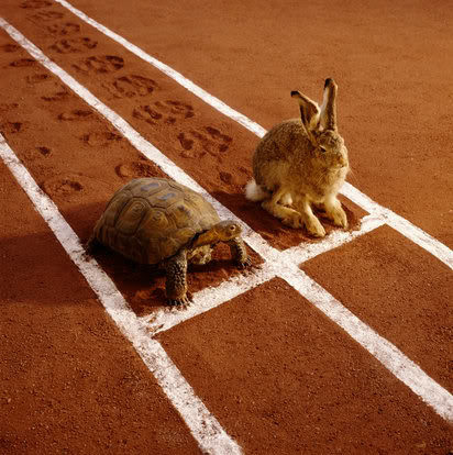 龜兔賽跑.jpg