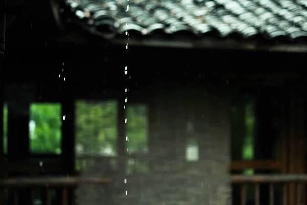 滴雨.jpg