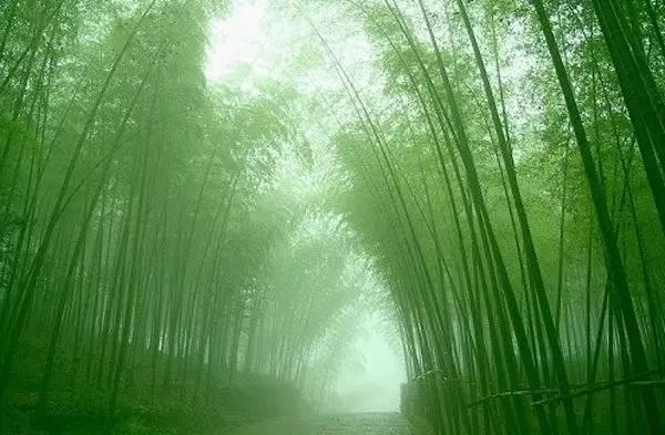 竹林.png