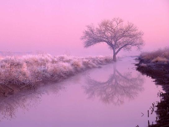 樹影.jpg