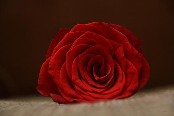 玫瑰.png