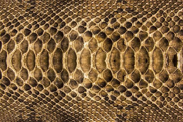 蛇皮.jpg