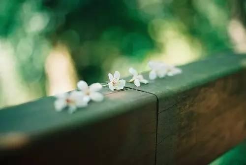落花.jpg