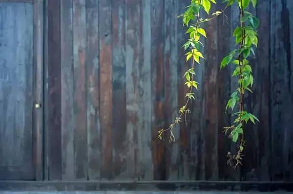 籬笆.jpg