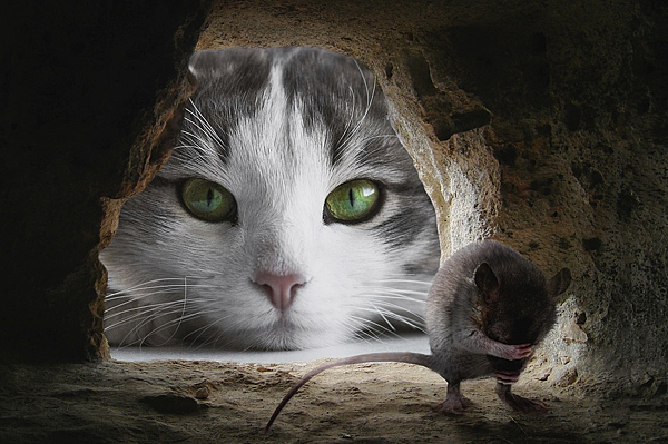 貓鼠.png