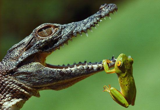鱷魚.png