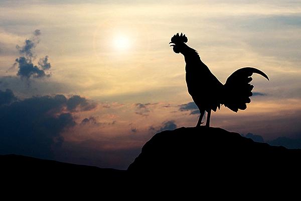 公雞.png