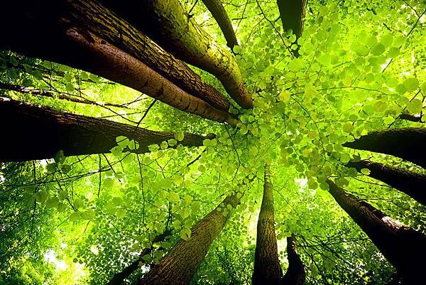 樹.jpg