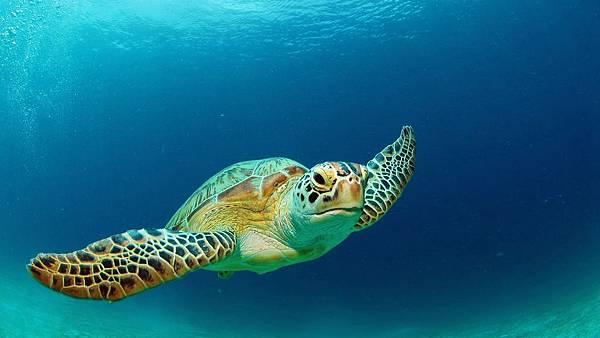 海龜.jpeg