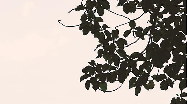 樹葉.png