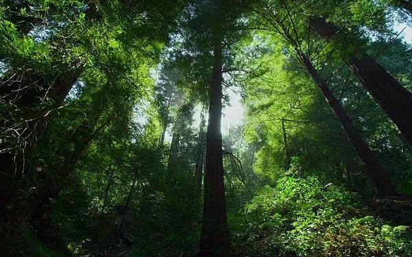 樹木.jpg