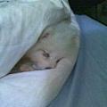 躲在棉被裡睡覺