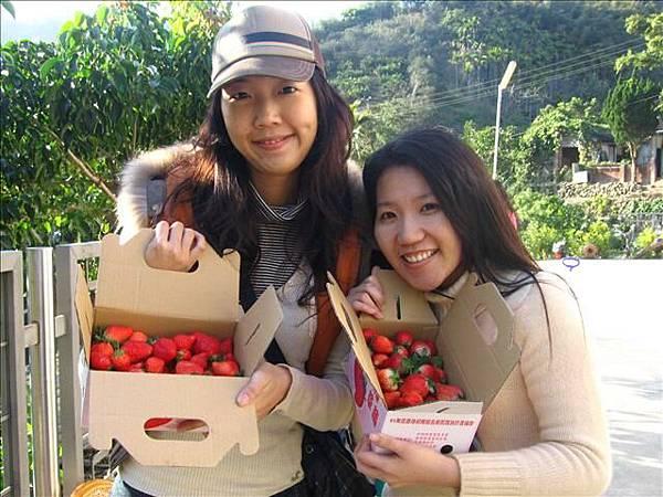 大湖採草莓去