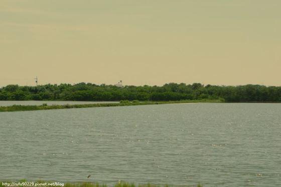 令人感到寧靜的魚塭風景.台南安平路景