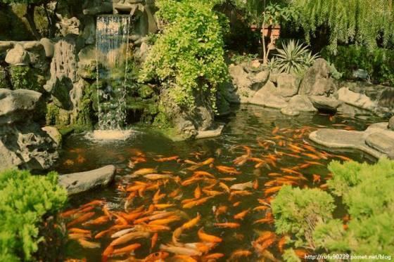 富貴有餘.台南赤崁樓之水池景觀