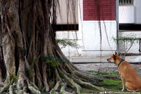 《廣遊記》台南篇:市.東區22