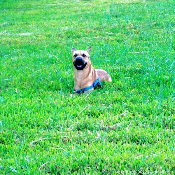 這傢伙在草地上玩得很爽啊!