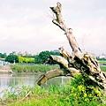 永和:世界豆漿大王.綠寶石運動河濱公園17