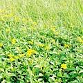 永和:世界豆漿大王.綠寶石運動河濱公園18