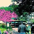 去逛了平常不會去的街,想找找看有沒有特別的小店,小店沒找到,倒是意外的發現了綻開櫻花的小公園,也挺樂的!