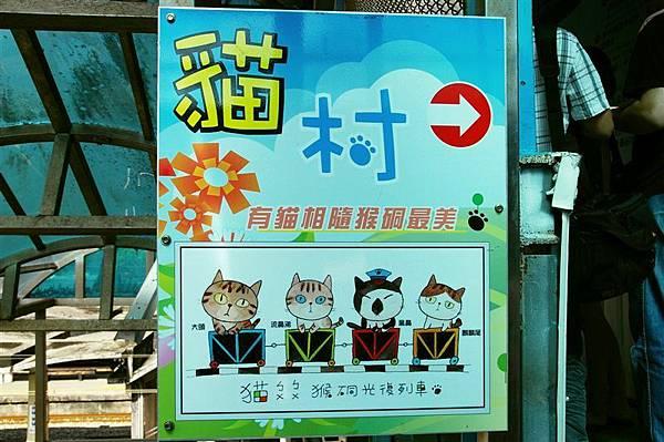 IMGP1349_最近很夯的貓村