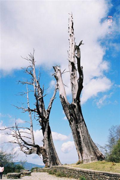 03_F1010007_夫妻樹