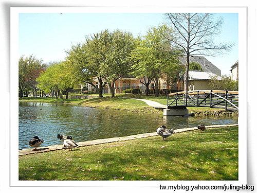 大湖畔水鳥生態2.jpg