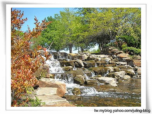 大湖畔水鳥生態3.jpg