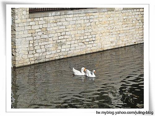 大湖畔水鳥生態4.jpg