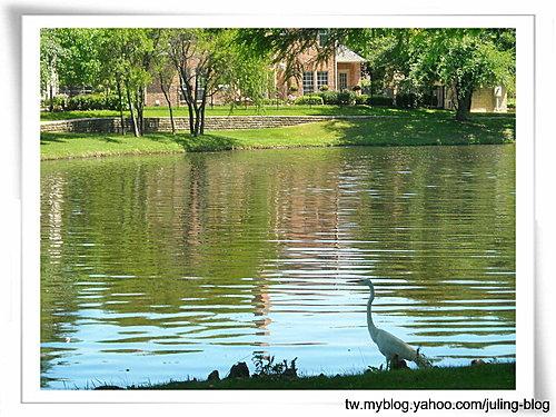 大湖畔水鳥生態7.jpg