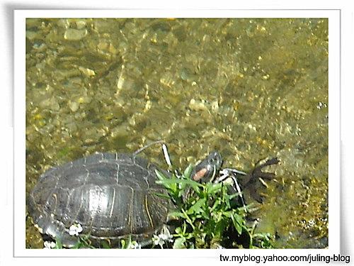 大湖畔水鳥生態8.jpg