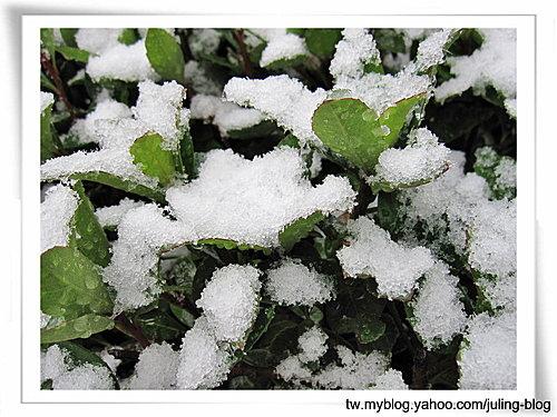 下雪了3.jpg
