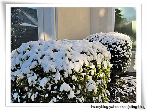 第一次白色耶誕5.jpg