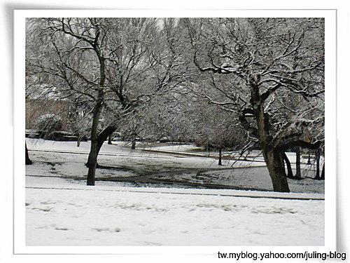 2011雪景6.jpg