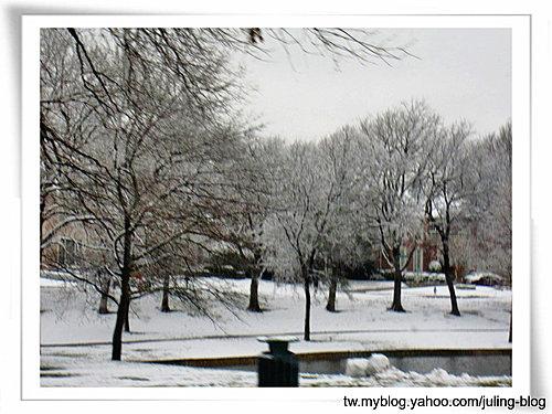 2011雪景7.jpg