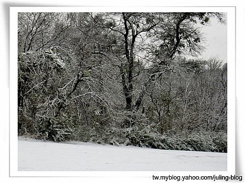 2011雪景9.jpg